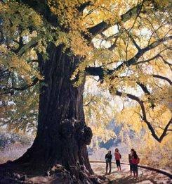 albero_max